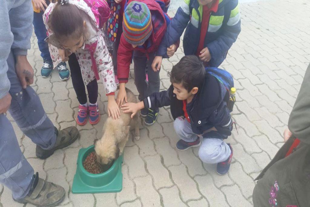 Geçici bakımevinde öğrencilere hayvan sevgisi aşılanıyor